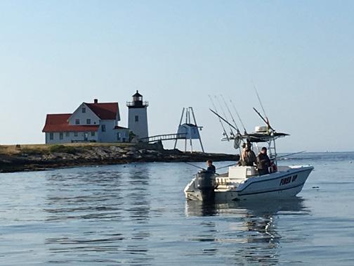 Casco Bay Weekly Fishing Report by Bob Humphrey